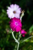 Summer Flowers 5 by Bazz-photography