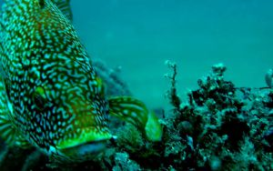 A Friendly Wrasse by zpyder