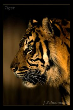 Tiger.. by Jna1985