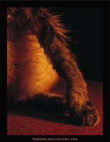 Elegance of a cat by pagone