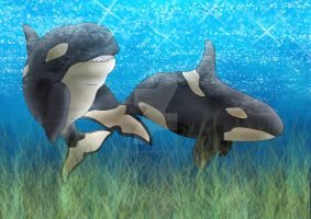 Killer whales WIP by EquineRibbon
