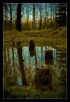 Wooded marsh by tomir