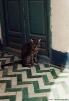 Cat Resting In Morocco by aalf