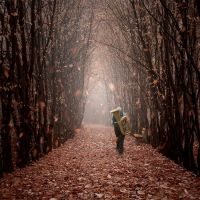 Falling leaves by Alshain4