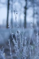 White World by webworm