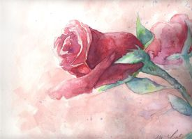 Rose - watercolor by orple