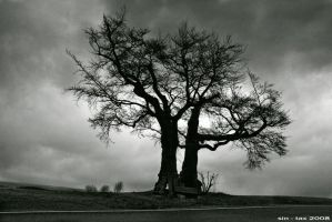 storm.clouds.old_tree by sin-tax