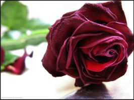 Turn my Black Roses Red by mavichaos