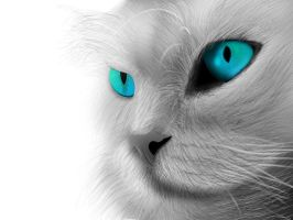 White Cat by fahadnaeem