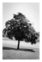 2014-210 Lone tree by pearwood