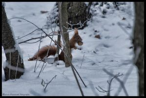 lost in the snow by kamykaldo