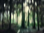 Forest 53 by Amalus