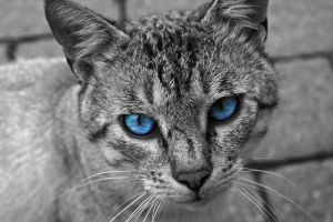 Blue Eyes by Romantizismus