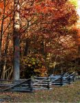 Fence With Fall Trees by deviousmoose