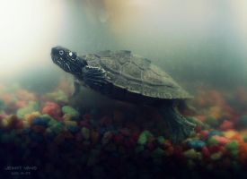 tiny turtle. by UsoIsLove