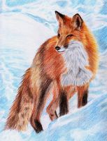 fox by Aillese
