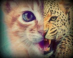 From a MEOW to a ROAR! by santiagoinzaurralde