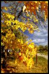 Simply autumn picture by heaven-id13