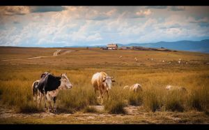 a pastoral theme by PortraitOfaLife