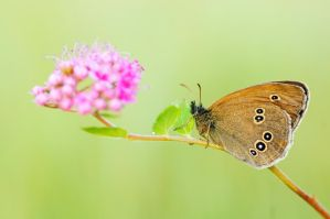 Beatty butterfly - Poland by cigane13
