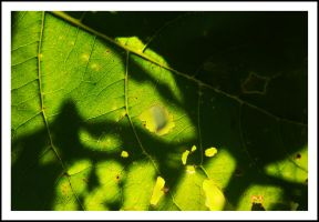 patch of green by sanwahi