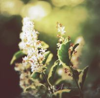 Spring by alkimh