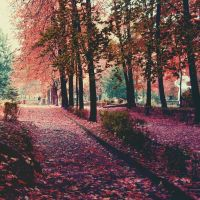 Fall by CocoaDesert