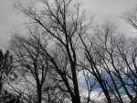 Barren Winter Trees by percyjackson8299
