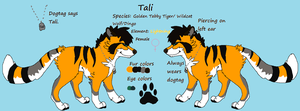 Tali Reference sheet by Hyperactive-Blue