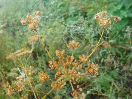 Cobwebs in the fog by Philosopher-Vinni