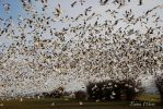 Swarms of White and Black by kaminskygirl