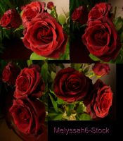 Rose Stock 8 by Melyssah6-Stock