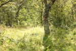 Green Forest by Aredelsaralonde