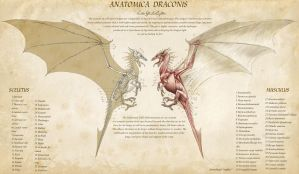 Anatomica Draconis by KatePfeilschiefter