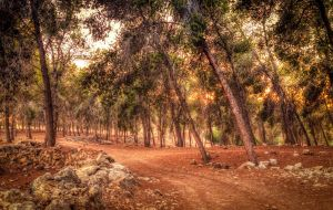 A walk in the woods by VTAL