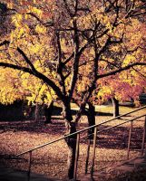 Fall Into Me by TheOn3LeftBehind