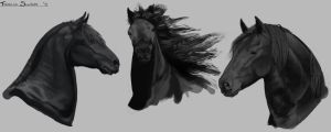 Friesian Studies by LhuneArt