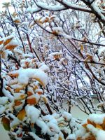 Snow on leaves by I-rE-nA-216