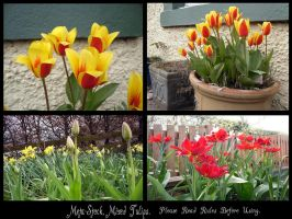 Mixed Tulips Multipack Stock by Meta-Stock