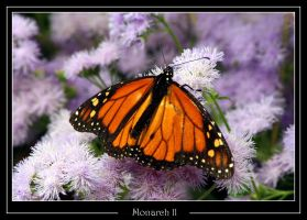 Monarch ll by WindCrest