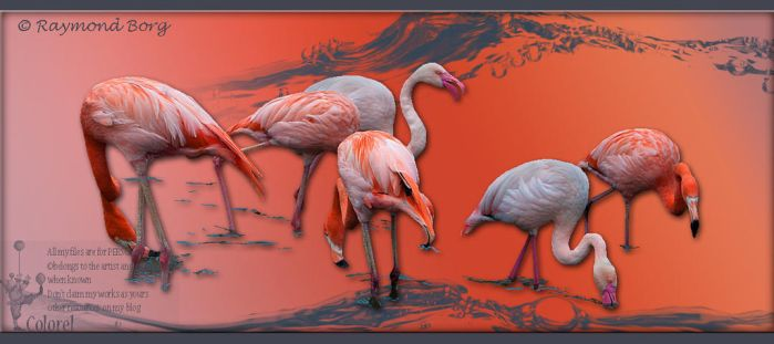Flamingos by libidules