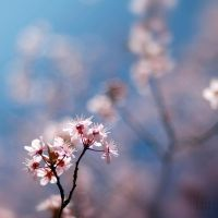 Spring is here finally... by Azram