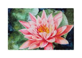 Water Lily by ArtEatsYou