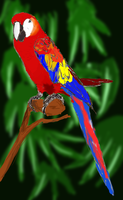 Parrot...maccaw...whatever by Puffun
