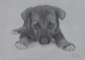 27 February - my sixth drawing - a sweet puppy by Jeroen88