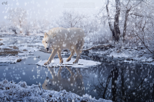 Winter Wonders by ElevatingDesign