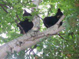 Twins in a tree number 2 by dracon666