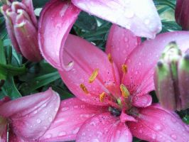 Lily in the rain by elysiaIvy