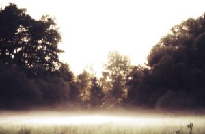 Mist 02 by CD-STOCK