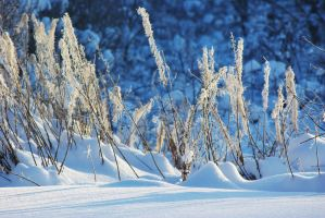 Rich colours of winter by valetaminepoleilus